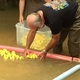Duck Race Brings Community Together for Good Causes