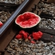 broken watermelon on train tracks